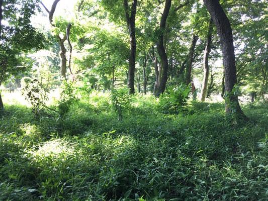 木漏れ日(済美山自然林)