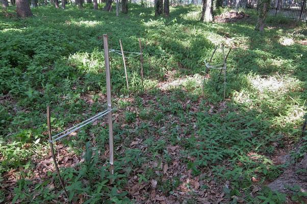 竹杭が不足して兼用しました