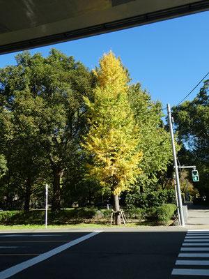 木々の紅葉・黄葉がとてもきれいな秋晴れの中、約10分で自然教育園の正門に着きました