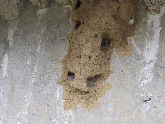 スズバチの巣