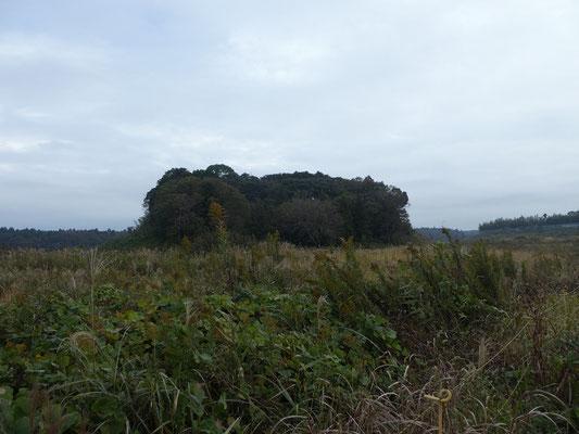 高龗(たかおかみ)神社の森