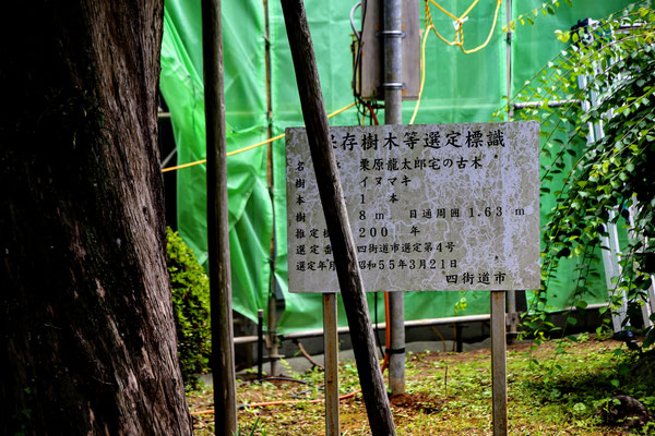 栗原家イヌマキ
