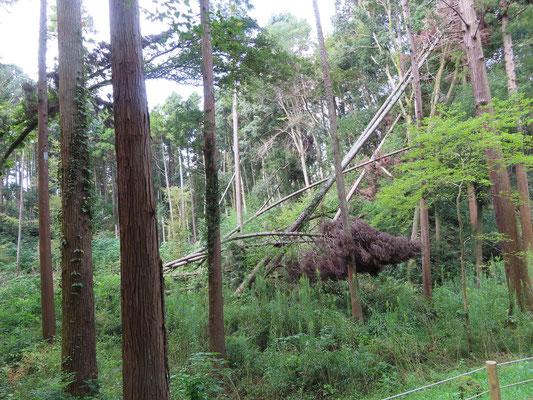 一昨年の台風被害