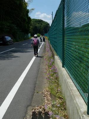 道端にセイヨウ桜草の花壇、先にはキンセンカ
