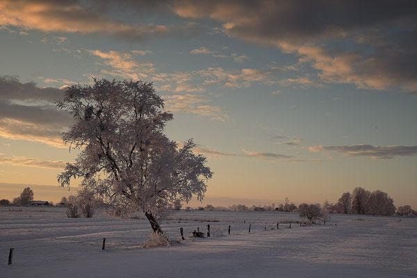 Winterabend bei Friedrichsgraben an der Eider 0134