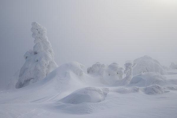 Harz, Brocken ,Fichtenwald im Winter 8860