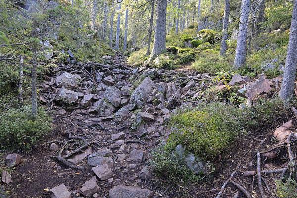 Skuleskogen Nationalpark 6770