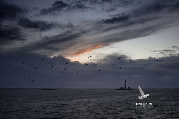 Leuchturm Westerhever Deutschland,Lighthouse Westerhever Germany 0049