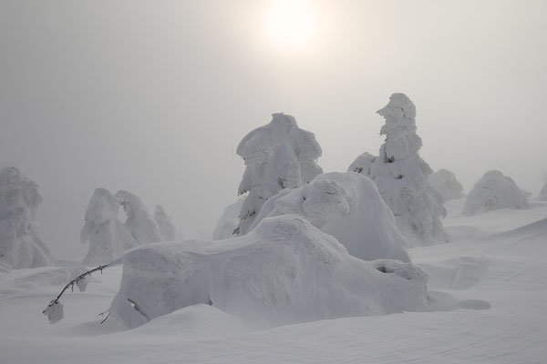 Harz, Brocken ,Fichtenwald im Winter 8813