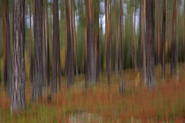 Herbst im Wald 6701