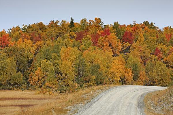 Herbstlandschaft Flatruet 6157