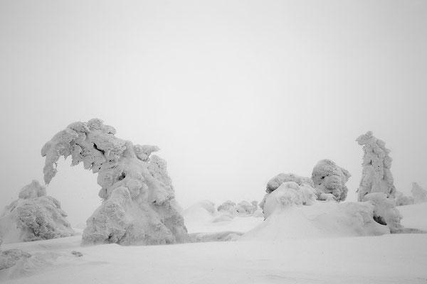 Harz, Brocken ,Fichtenwald im Winter 8778