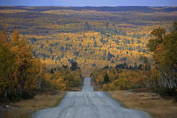 Herbstlandschaft Flatruet 8948.