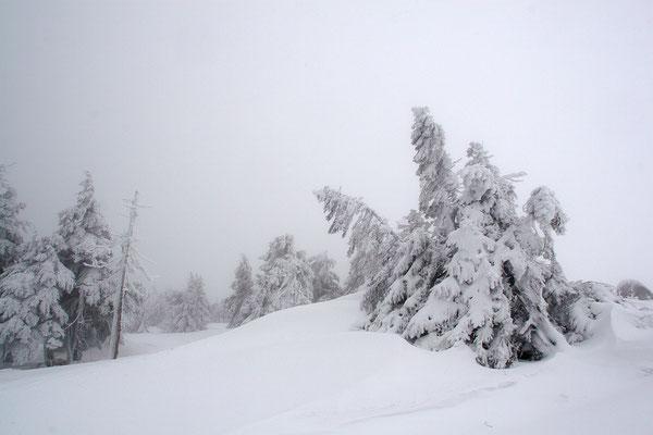 Harz, Brocken ,Fichtenwald im Winter 0921