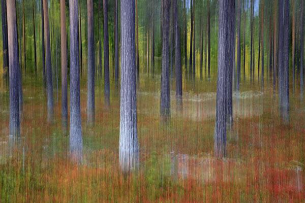 Herbst im Wald6732