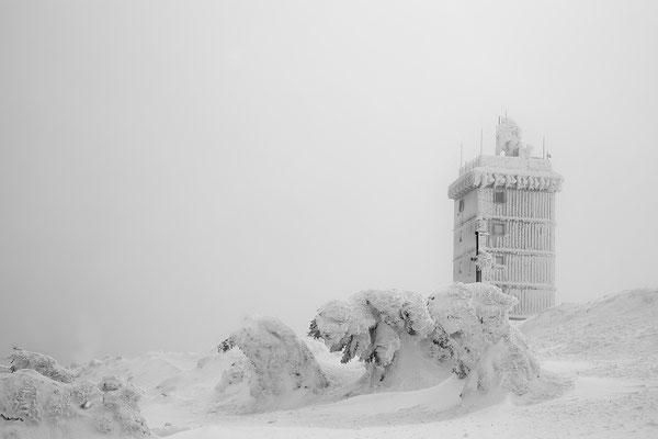 Harz, Brocken ,Fichtenwald im Winter 8765