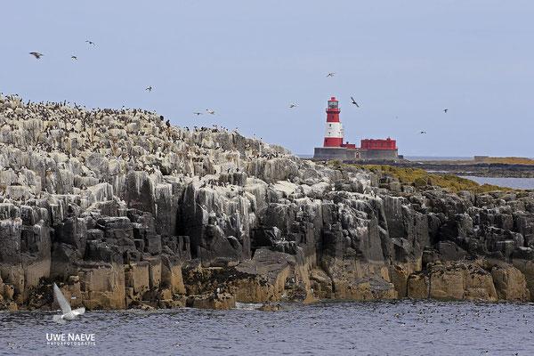 Leuchtturm Long Stone Farne Island England 3914