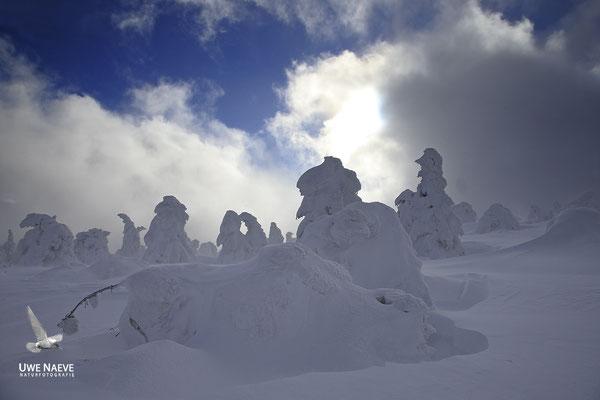 Harz, Brocken,Fichtenwald im Winter 8889