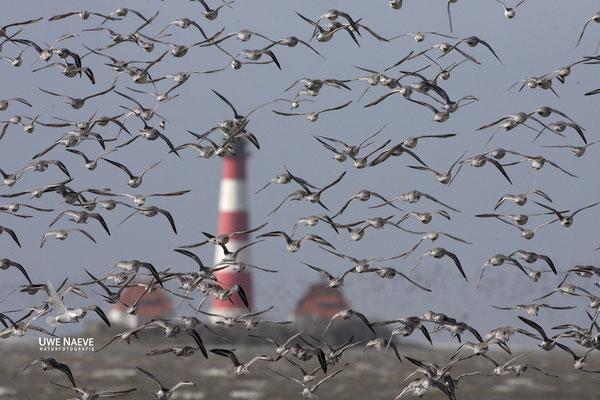 Leuchturm Westerhever Deutschland,Lighthouse Westerhever Germany 0001