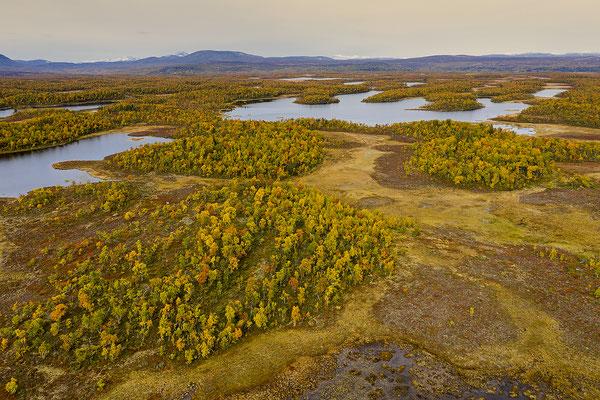 Herbstlandschaft Flatruet 0976