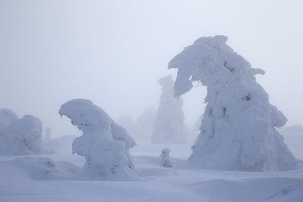 Harz, Brocken ,Fichtenwald im Winter 8789