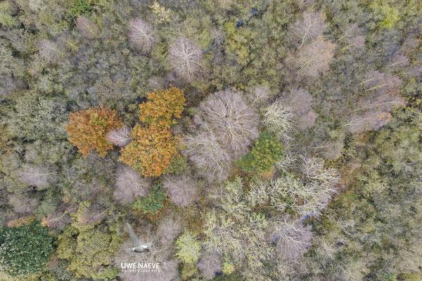 Herbst 0706