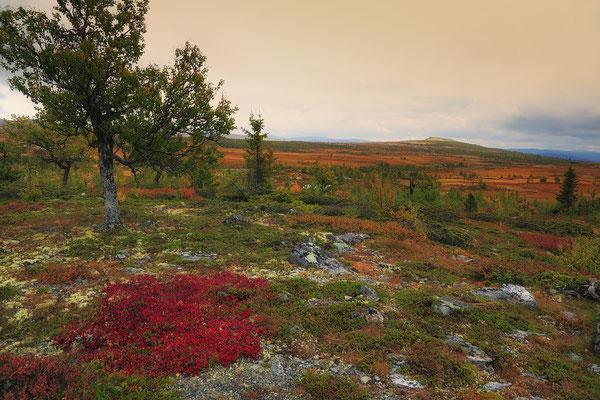 Rondane NP 8746