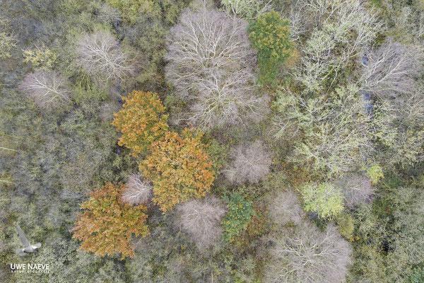 Herbst 0696