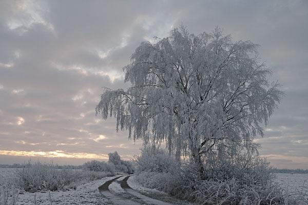 Winter 7383