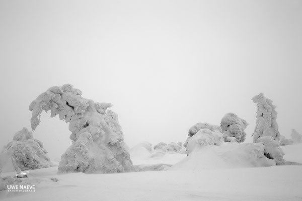 Harz, Brocken,Fichtenwald im Winter 8778