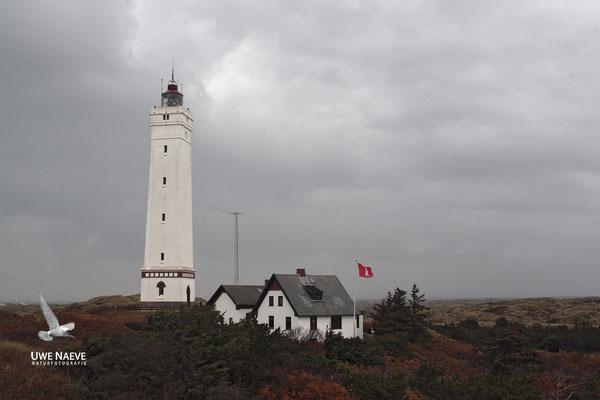 Leuchtturm Blavandshuk Daenemark,Lighthous Blavand Danmark 0012