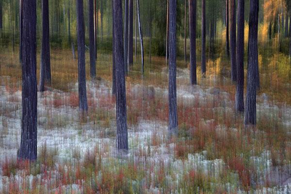 Herbst im Wald 5748