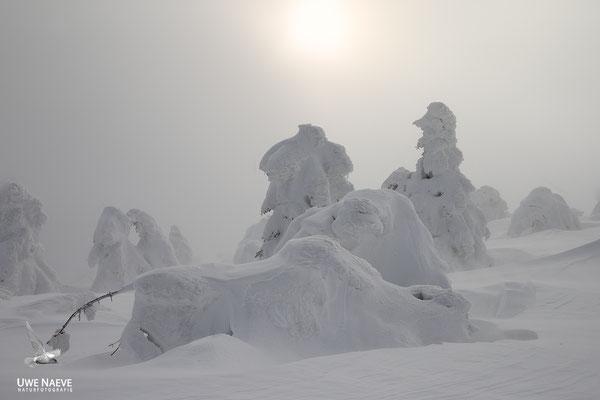 Harz, Brocken,Fichtenwald im Winter 8871