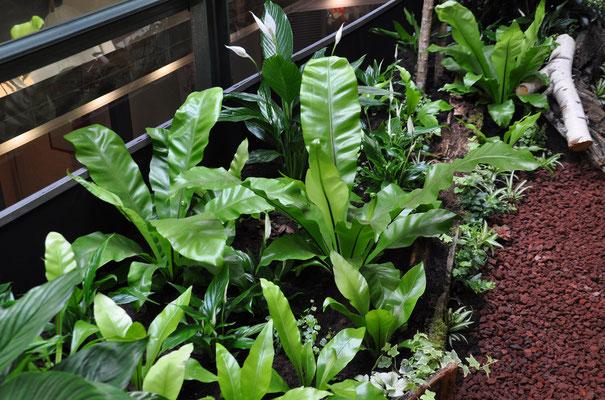 paysagisme d'intérieur patio