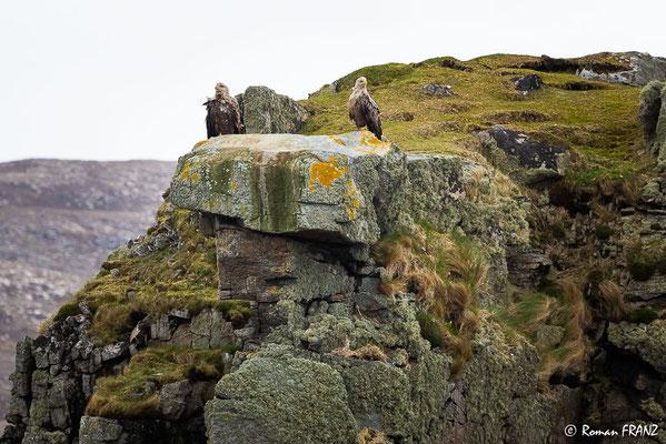 2 Seeadler, Insel Skye Schottland