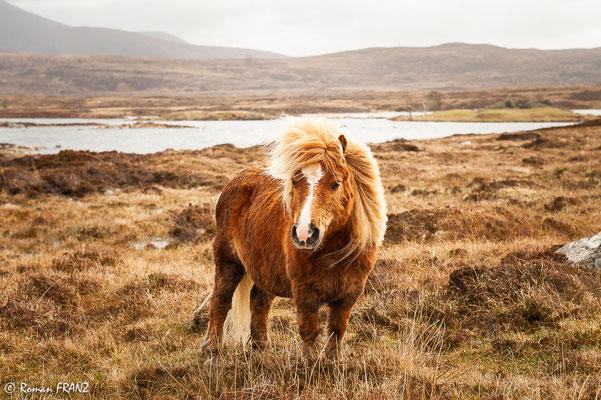 einsames Pferd auf South Uist, Schottland