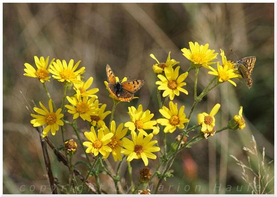 Letzte Blüten und Schmetterlinge.