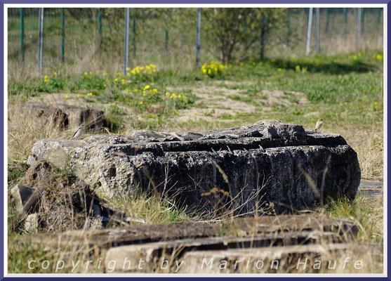 Steinschmätzer-Pärchen (Oenanthe oenanthe) an einem Brutplatz in einem Schutthaufen