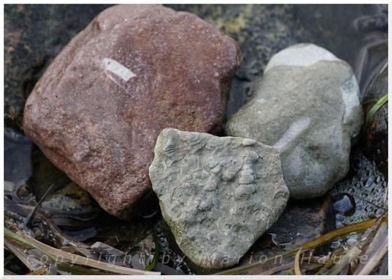 Verschiedene Fossilien.