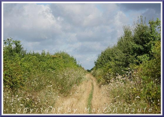Ein von Hecken begrenzter Weg, an den sich Felder anschließen.