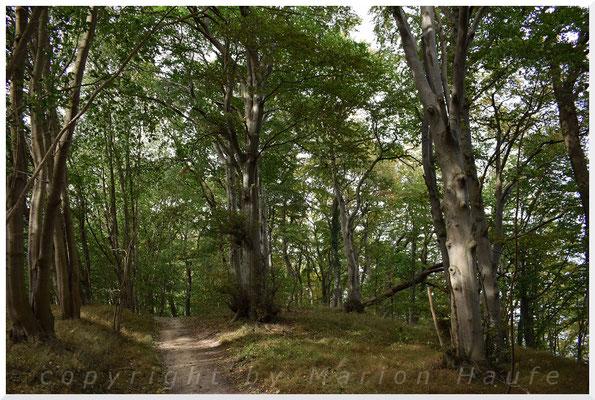 Wald bei Göhren.