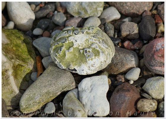 Versteinerter Seeigel.