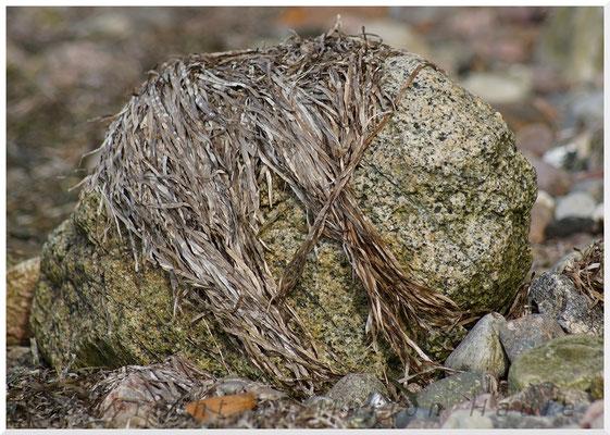 Stein mit verdorrtem Seegras.