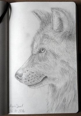 Skizzenbuch: 28. Skizze Wolf