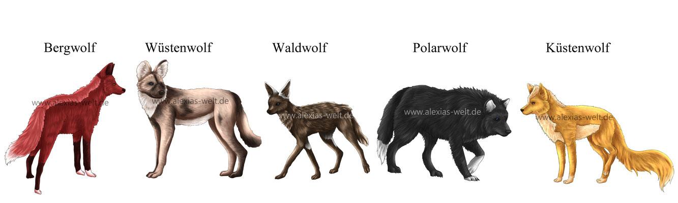 Größenvergleich der Wolfsarten von Lupus et Lupa