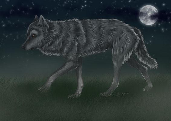 grauer Wolf in der Nacht