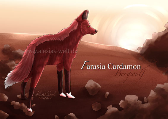 Bergwolf: Farasia Cardamon
