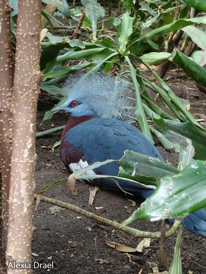 Im Vogelhaus gibt es seltsame Vögel ;)