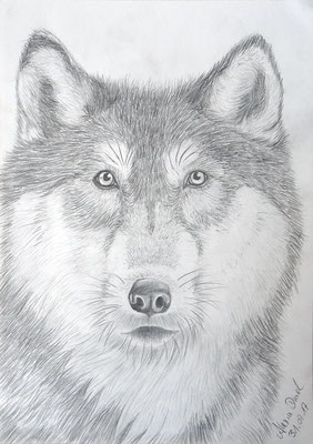 Wolf  Din A4 Format