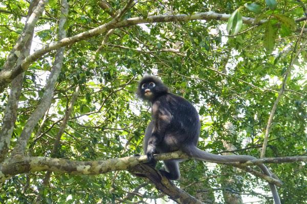 Mu Ko Lanta Nationalpark